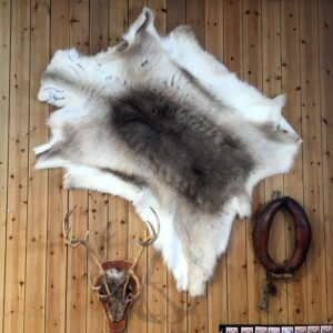 Reindeer skin indoors