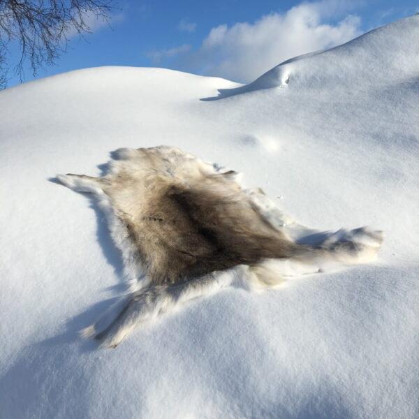Reindeer skin-outdoor- outdoor life